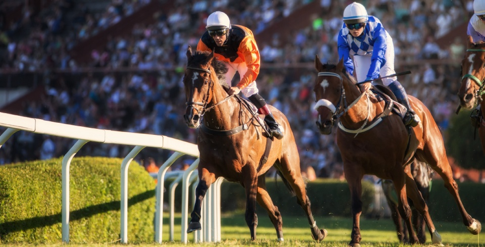 What is tote betting and how to bet with the Tote